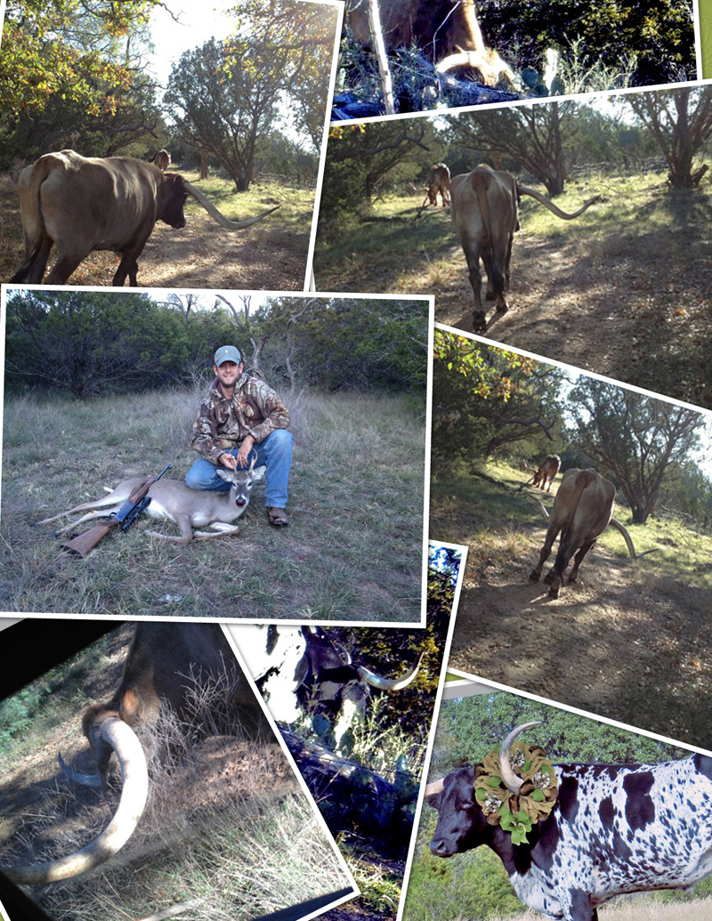 colage longhorns Buck